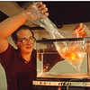 4/11/97 Aquarium Show - James Neiss Photo - Glynn Matthews of Sanborn, NY, Show Co-Chairman and VP of the WNY Aquarium Society prepairs for this weekends show at the NIagara Falls Aquarium.