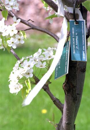 98/04/24 Blooming Memories-Rachel Naber Photo-Canalside Memorial tree garden is in bloom with colors and memories.