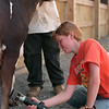 "98/07/28 Pre pare fair-Rachel naber Photo-Julie beach  a six year particapant in 4-h prepares ""Isabella, a jersey cow fro her first show."