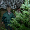 98/12/07 booth tree 3--dan cappellazzo photo--dorothy and darvin winters, of gasport, look at a blue spruce to tag for thier holiday tree.