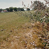 7/17/97--GRAND ISLAND/OGNIBENE--DAN CAPPELLAZZO PHOTO--A DYING TREE NEXT TO WEST RIVER RD, IN G.I. THE TREES WERE SPRAYED WITH CHEMICALS SO RESIDENTS COULD SEE THE RIVER.