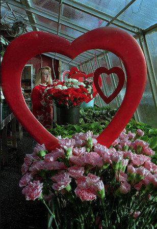 98/02/05 Hearts&Flowers *Dennis Stierer photo - Cindy Hahn Davis checks over the inventory of flowers at a local florist in  preparation for the upcoming of many arrangements.