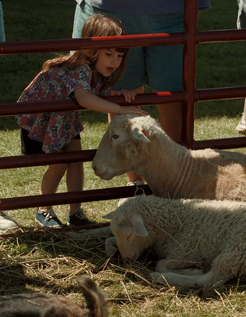 98/05/24 Somerset Festival 2 - James Neiss Photo - Alexandra Tillman 3yrs of Appleton, NY pets one of the sheep on display at the annual Somerset Old Fashioned Farm Festival.