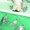 1/4/96-- dolphin --Takaaki Iwabu photo-- Kurt Butkiewicz, aquarist of marine mammals from Mystic Marinelife Aquarium, feeds the dolphins at Aquarium of Niagara Saturday. <br /> <br /> local, Sunday