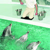1/4/96-- dolphin --Takaaki Iwabu photo-- Kurt Butkiewicz, aquarist of marine mammals from Mystic Marinelife Aquarium, feeds the dolphins at Aquarium of Niagara Saturday. <br /> <br /> local, Sunday
