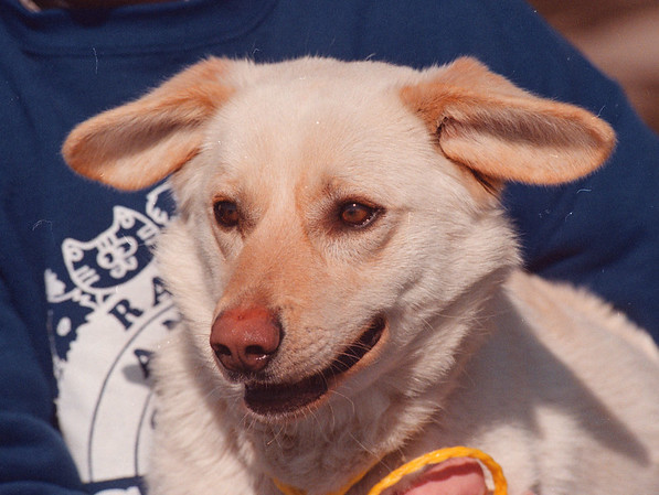 4/10/97 Pet of the Week - James Neiss Photo
