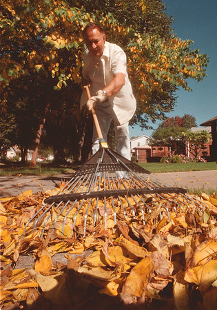 97/10/10 Never Ending Job - James Neiss Photo - Ray Sarazin of 74th street was raking leafs for the 4th day in a row sense his trees started sheding. Said he was happy with the nice weather to do it in though.