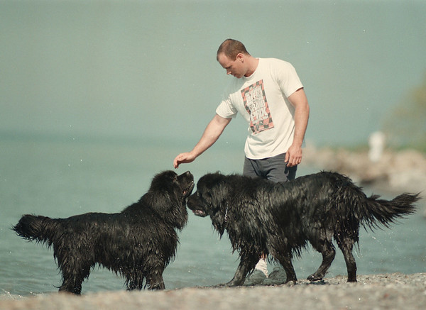 "98/05/06-- newfoundland --Takaaki Iwabu photo-- Chris Salada of Lewiston takes his Newfoundland dogs, ""Bart"" and ""Goliath,""  for their everyday's walk at Fort Niagara Wednesday. <br /> <br /> grapevine photo"