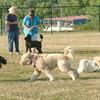 100812 dog park