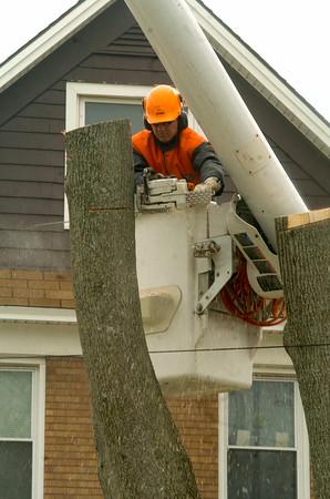 110504 tree work