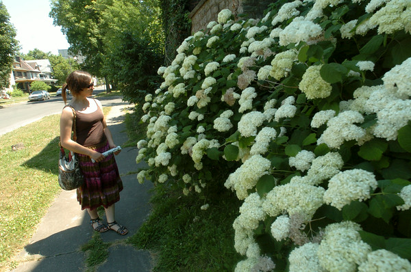 110716  Garden Walk2