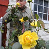 James Neiss/staff photographerNiagara Falls, NY - DECEMBER BLOOM: Arnie Rochon of Grand Avenue takes in what he describes as a sweet anise scent of these apparently, very hearty yellow roses. The 80 year old Grand Avenue resident, said he was amazed at how many late blooms there were.
