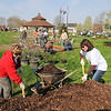 James Neiss/staff photographerNiagara Falls, NY  - National Grid volunteers Rachel Brennan, left, and Debbie Sullivan gather some mulch for the landscape work at Gill Creek Park. National Grid is helping the Niagara Street Business Association add some landscaping to the park.