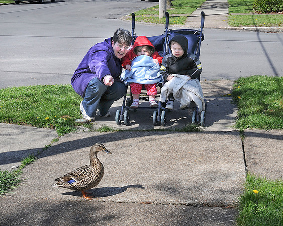 "James Neiss/staff photographerNiagara Falls, NY - Kathy Fratello gets her grandchildren Allana Abel and David Fratello, also 2, to say the word ""duck"" after one started to cross their path during a walk on Michigan Avenue. Fratello, said they were doing a good job and identified a helicopter, a plane, a garbage truck and more on their walk so far."