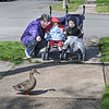 """James Neiss/staff photographerNiagara Falls, NY - Kathy Fratello gets her grandchildren Allana Abel and David Fratello, also 2, to say the word """"duck"""" after one started to cross their path during a walk on Michigan Avenue. Fratello, said they were doing a good job and identified a helicopter, a plane, a garbage truck and more on their walk so far."""