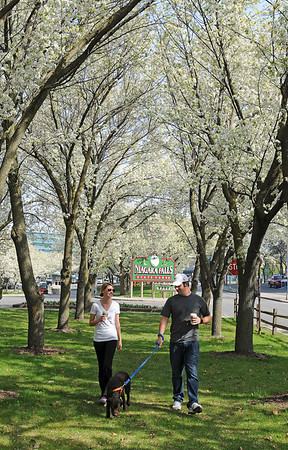 James Neiss/staff photographerNiagara Falls - Tourist Paul Bugajski, his dog Murphy and Amber Gaska, all of Pittsburg, enjoy a walk between flowering trees at the entrance to Niagara Falls State Park.