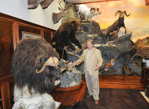 James Neiss/staff photographerNiagara Falls, NY - Local big game hunter and businessman John L. Hutchins stands next to a trophy Musk Ox from Nunavik, Canada,  in his Niagara Falls business office. Hutchins is opening a new campground called Bear Creek near Ellicottville in late summer.