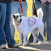 "James Neiss/staff photographerTown of Niagara, NY - Emma the dog of Cambria, sports a ""No Kill"" T-shirt with the saying ""I survived Faso"" on the back, during a protest at the Niagara SPCA. Animal Allies of WNY rallied supporters to speak out against mismanagement, neglect and mass killings of healthy companion animals outside the Lockport Road Rainbow Animal Shelter."