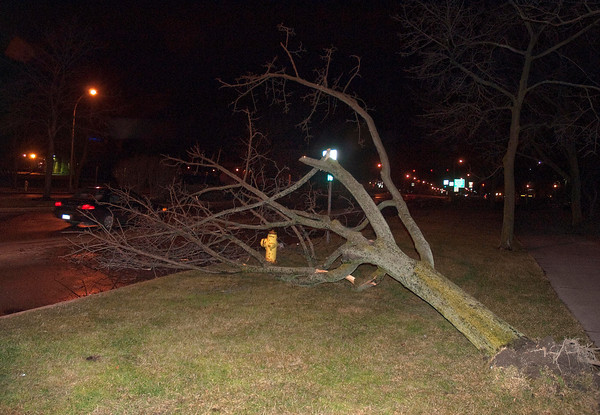 James Neiss/staff photographerNiagara Falls, NY - A tree in the 200 block of Niagara Street was no match for the gusty winds on Tuesday evening in Niagara Falls.