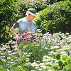 James Neiss/staff photographerNiagara Falls, NY - Caretaker Teddy Kajdasz takes care of the garden at his employer's Woodlawn Avenue home.