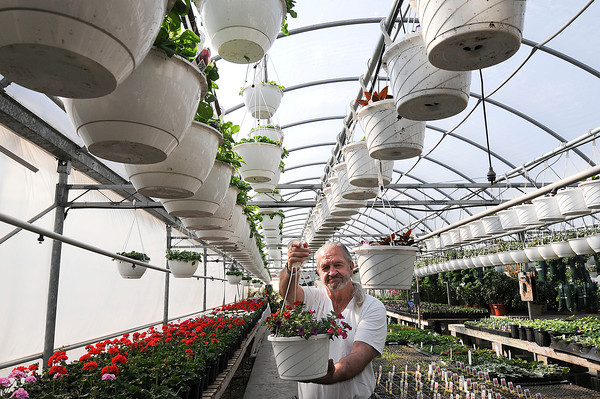 Lockport, NY - Steve Boka, owner of Boka Farms on Campbell Boulevard, shows off a hanging basket.