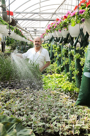 James Neiss/staff photographerLockport, NY - Steve Boka, owner of Boka Farms on Campbell Boulevard, waters plants in his greenhouses.