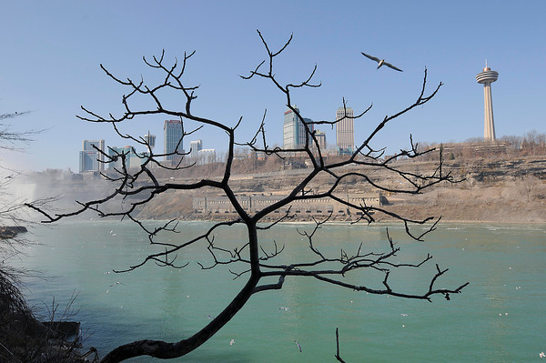 James Neiss/staff photographerNiagara Falls, NY - A leafless tree along the walkway to the Cave of the Winds decks at the base of the American Falls at Niagara Falls State Park make for an interesting view of the Niagara Gorge and Niagara Falls, Ontario.