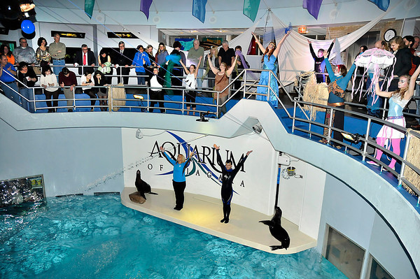 James Neiss/staff photographerNiagara Falls, NY - Marine Mammal Trainers and aquarium staff put on a show featuring Diamond, Kiah and Arie the Sea Lions for guests at this years SEAsonings fund raiser at the Aquarium of Niagara.