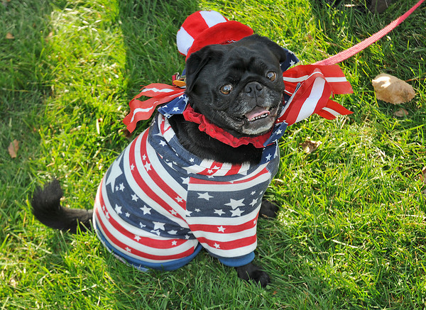 James Neiss/staff photographerNiagara Falls, NY - Peetie the dog showed of his patriotic side as he attends the 2012 Niagara Falls Veterans Day observance at Hyde Park with owners Joyce Harris and her father Joseph Onesi, a WWII veteran.