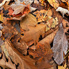 James Neiss/staff photographerNiagara Falls, NY - A fisheye lens makes for an interesting view of the colorful leaves on the ground at Whirlpool State Park.