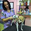 James Neiss/staff photographerNiagara Gazette, NY -Teresa Reynolds, owner of Diva Dog, takes care of a client at her Niagara Falls Boulevard shop.