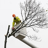 James Neiss/staff photographerNiagara Gazette, NY - Forestry Department worker Rob Kimball prepares a tree to be felled in the 8700 block of Munson Avenue, after rain and wind caused to to tip overnight.