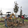 James Neiss/staff photographerNiagara Falls, NY - A crew from Wayside Landscaping & Nursery, from left, Bryan Deuble, Mike Rotella and Nick Tobol, plant some of the 68 trees and 140 shrubs that are part of a beautification project at the NYS Power Authority water intakes on the Robert Moses Parkway.