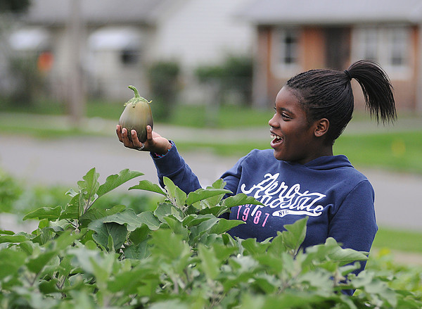 James Neiss/staff photographerNiagara Falls, NY -Veronica Tangle, 12, was very happy with an eggplant she picked while tending the Highland Community Vegetable Garden at the Henry J. Kalfas Elementary School.
