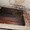 130513 Honey Bee 2