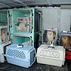 130204 SPCA Raid 5
