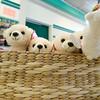 130314 Polar Cub 8