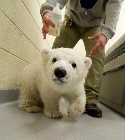 130314 Polar Cub 1