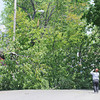 130515 Tree Enterprise
