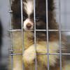 130205 SPCA Follow 1