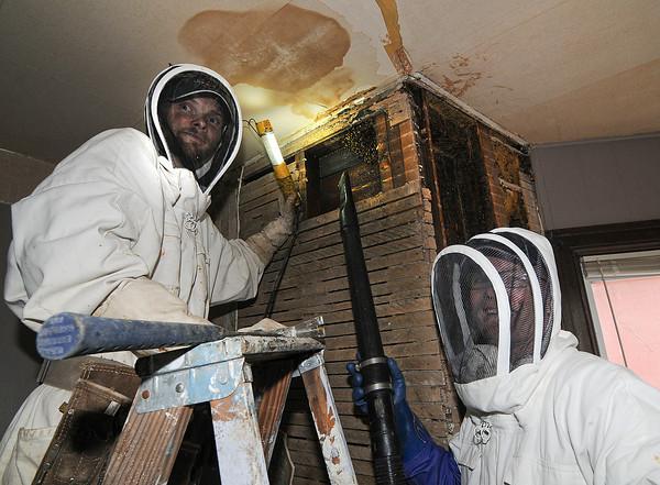 130513 Honey Bee 1