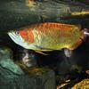 130304 Aquarium Visit 3