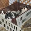 130204 SPCA Raid 14