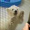 130314 Polar Cub 2