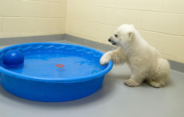 130314 Polar Cub 7