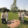 130717 Tree Plaque 1
