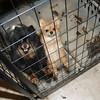 130204 SPCA Raid 7
