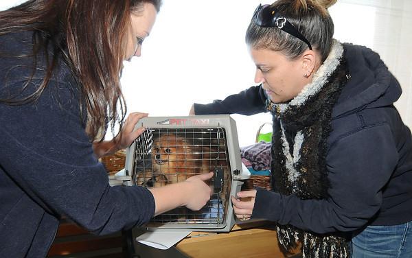130205 SPCA Follow 4