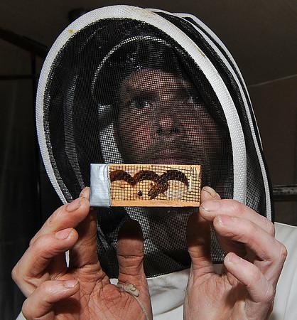130513 Honey Bee 5