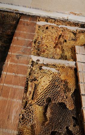 130513 Honey Bee 4